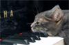 cat_fk