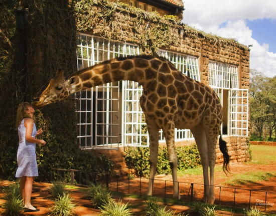 Giraffe-Manor-003