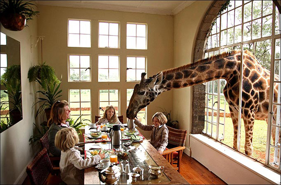Giraffe-Manor-006