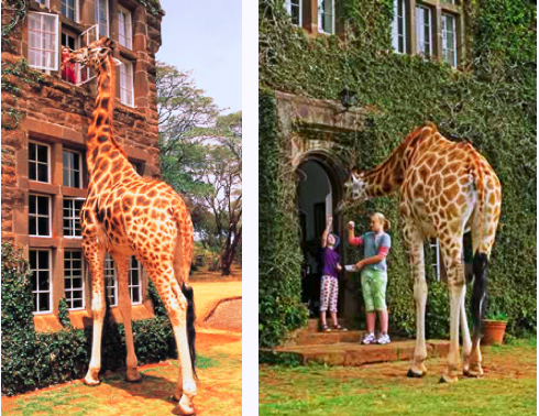 Giraffe-Manor-014